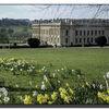 Chatsworth and daffodils