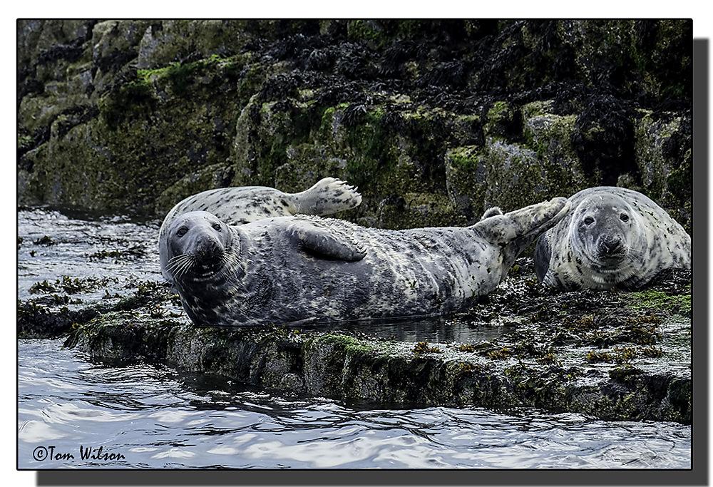 photoblog image Farne Island Seals