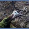 Welbeck Peacock
