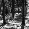 A way through the woods