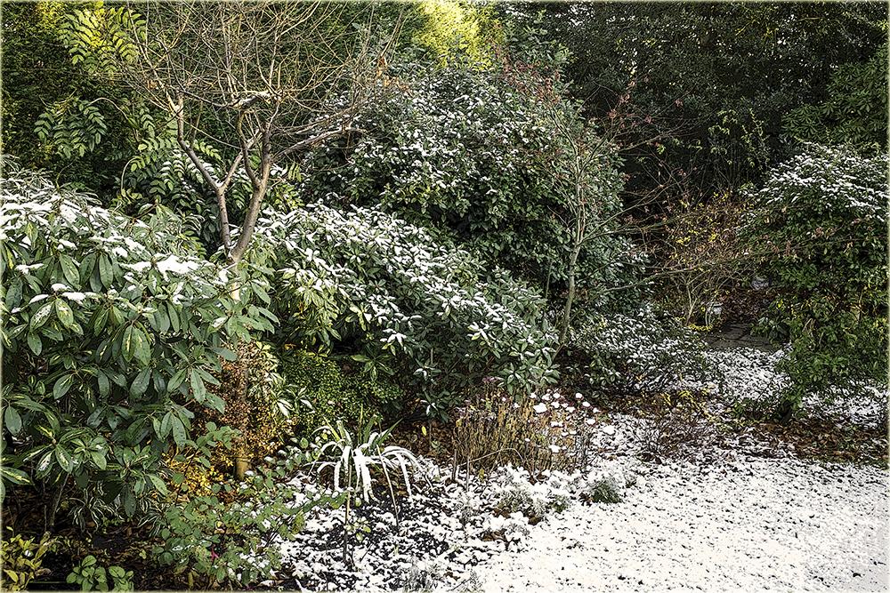 photoblog image Winter Garden