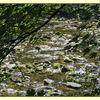 Shining water
