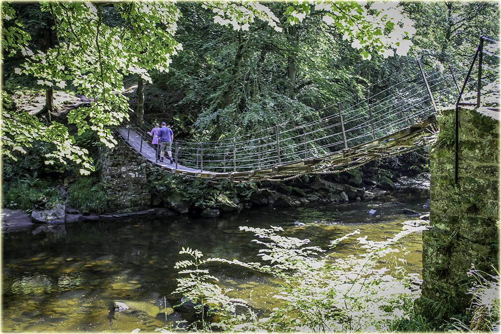 photoblog image Woodland Bridge