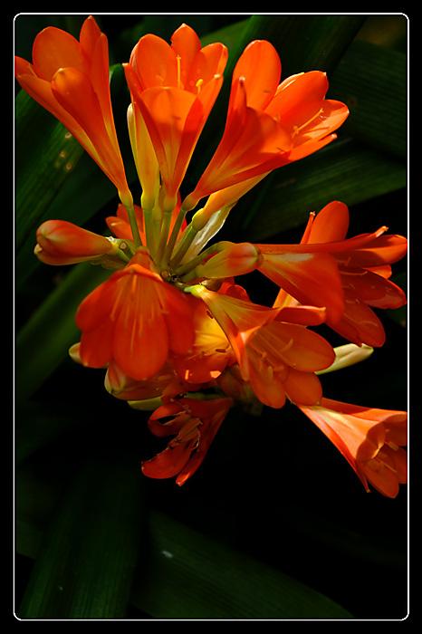 photoblog image Glasshouse bloom