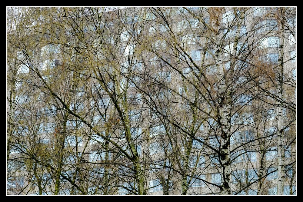 photoblog image Natural shield