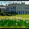Brodsworth Hall - House and daffodils - 1