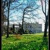 Brodsworth Hall - House and daffodils - 2