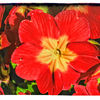 Spring in the Gardens - Primula