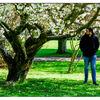 Spring in the Gardens - Cherry blossom fan