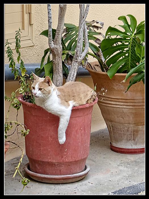 photoblog image Cat in a pot