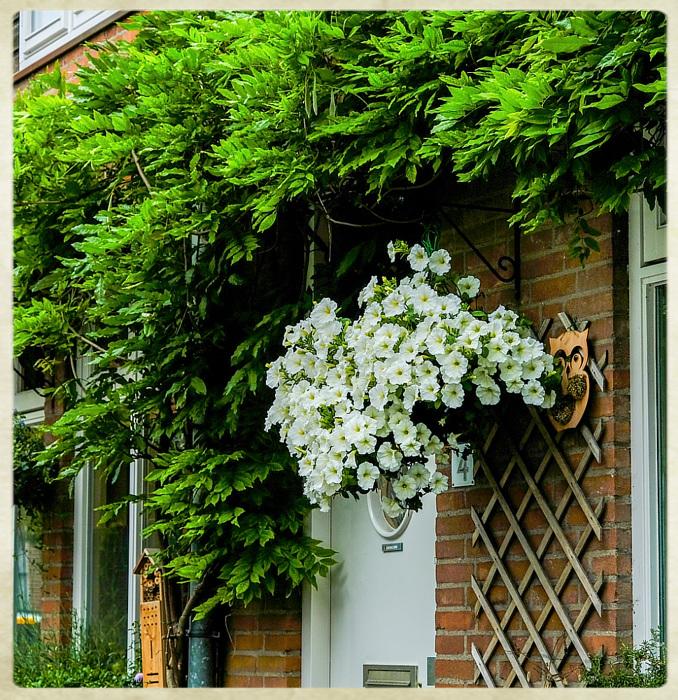 photoblog image Haarlem - blossoms