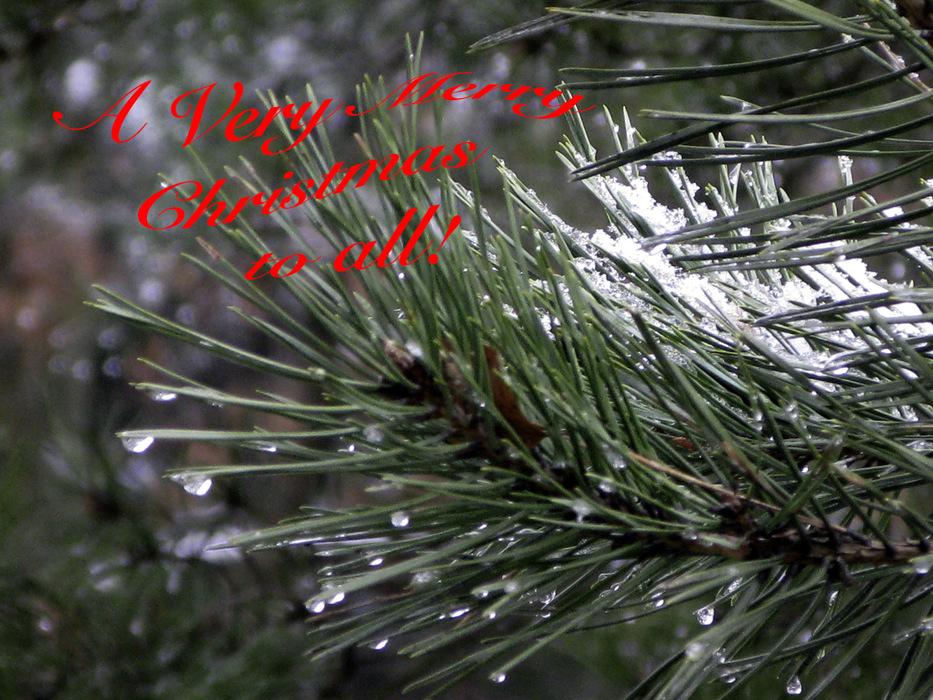 photoblog image Christmas.jpg