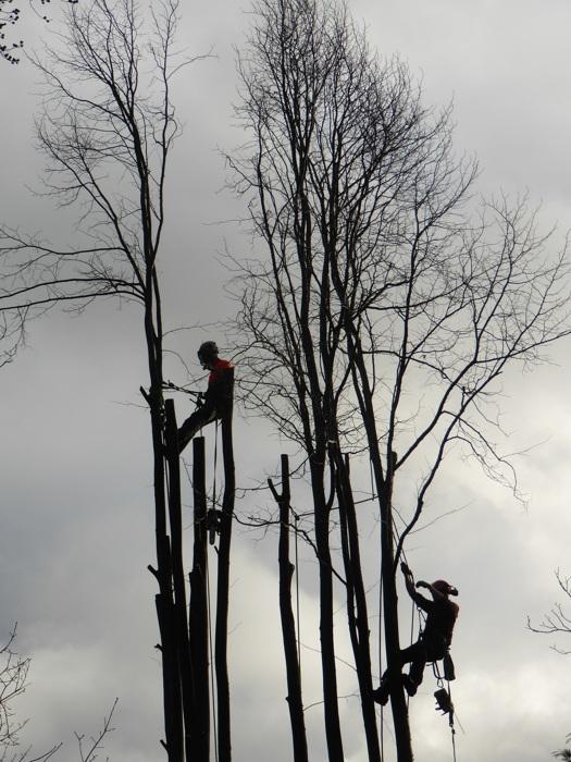 photoblog image Climbing arborists...