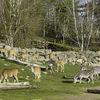 Borås-Zoo-antelopes, zebras, and a stray ostrich.