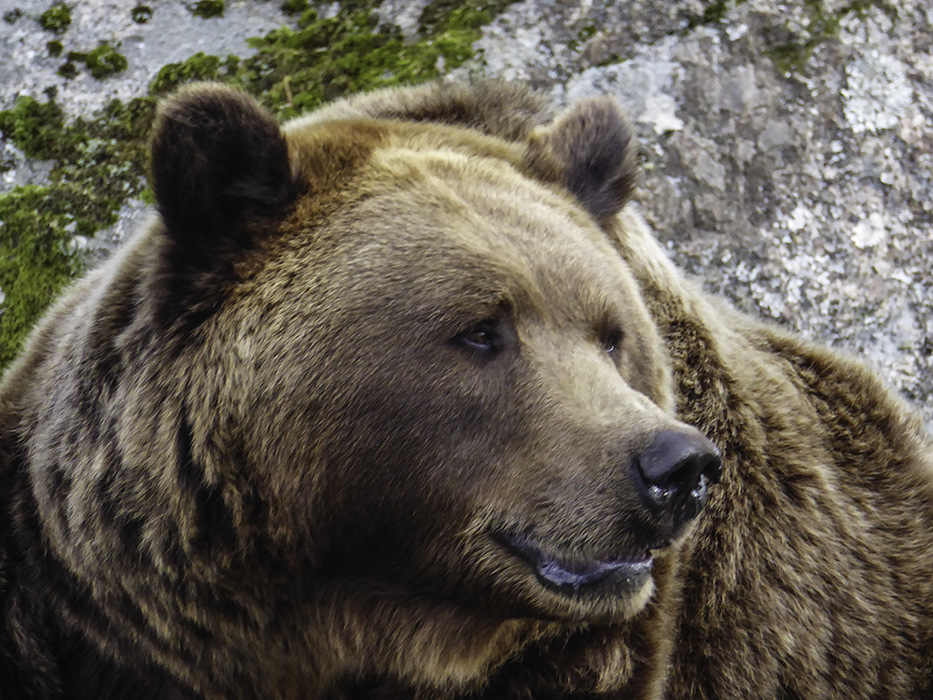photoblog image BoraÌÃ'ÂÅs-Zoo-Brown bear