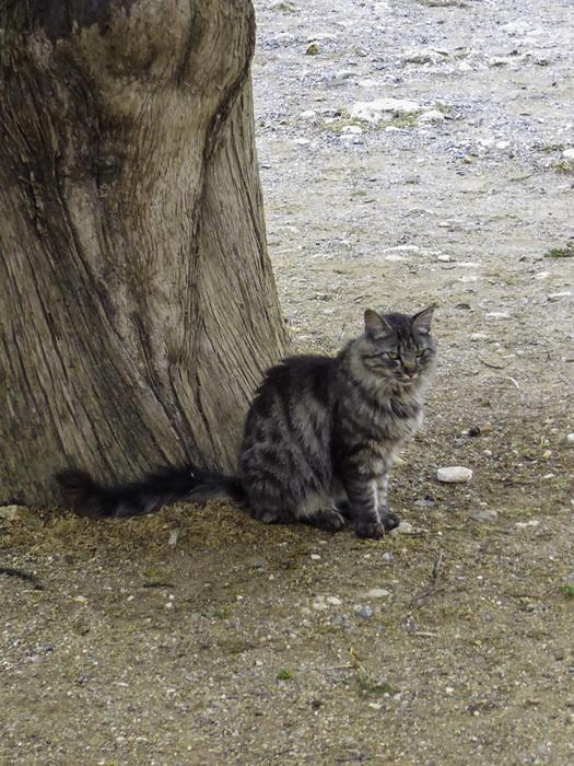photoblog image Crete-Arkadi monastery cat