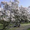 Enjoying the blossom - 1