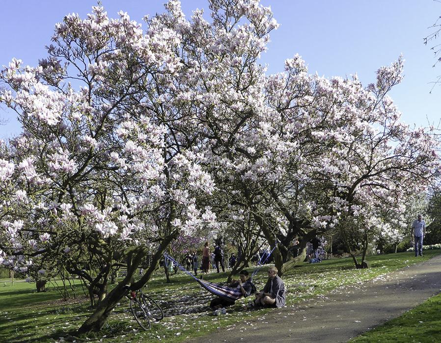 photoblog image Enjoying the blossom - 1