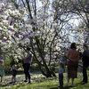Enjoying the blossom - 2