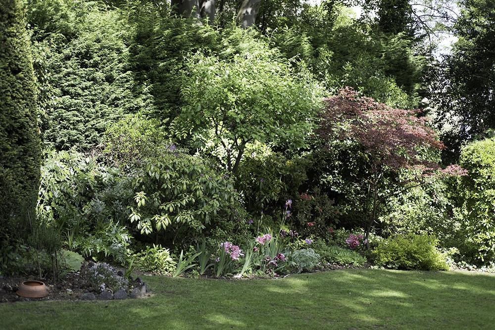 photoblog image Summer garden