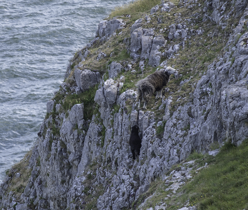 photoblog image Cliff Climbers