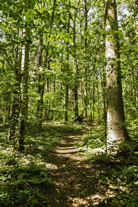photoblog image Verkiai regional park-in the forest