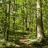 Verkiai regional park-in the forest