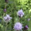 Verkiai regional park - flowers
