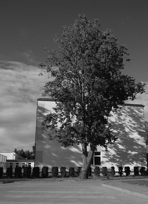 photoblog image Solitary tree, Dusetos, Lithuania,