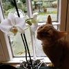 Puss and orchid