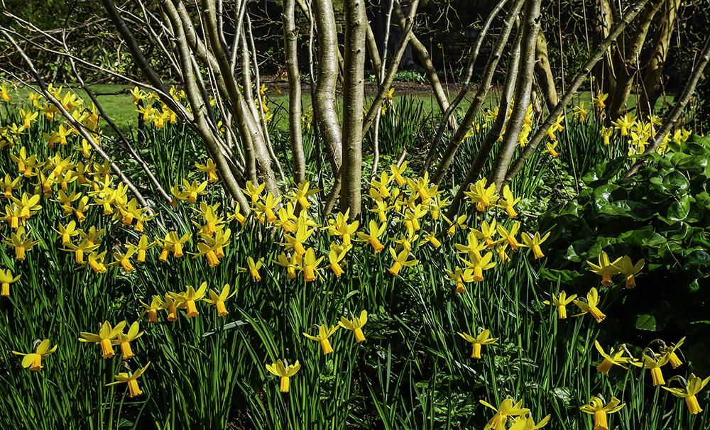 photoblog image Spring in the gardens-1