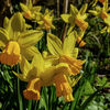 Spring in the gardens-2