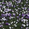 Spring in the gardens-4