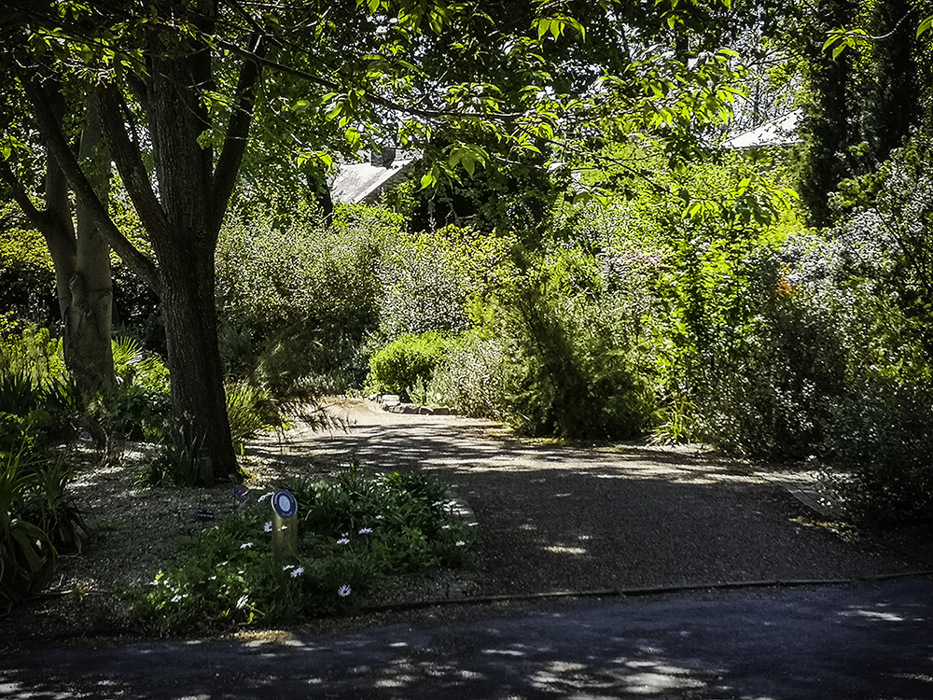 photoblog image Mediterranean garden
