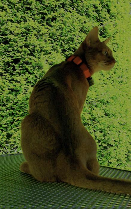 photoblog image Puss on guard