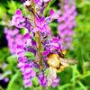 Nectar hunter