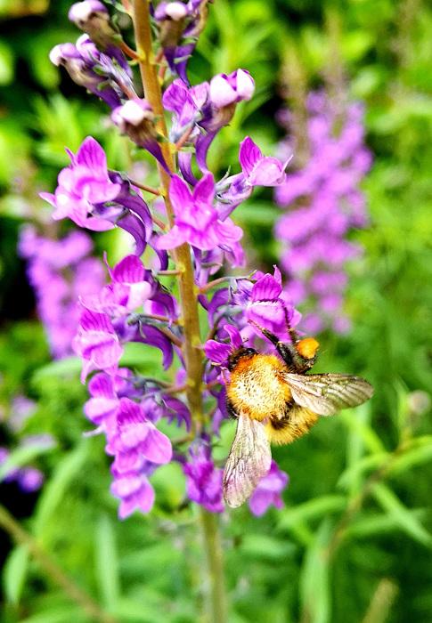 photoblog image Nectar hunter