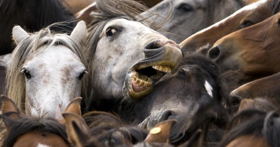 photoblog image A caballo regalado...