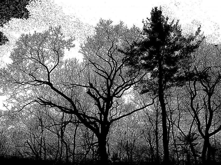 photoblog image edge of the woods
