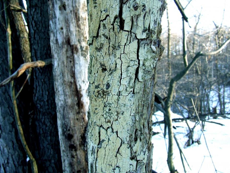 photoblog image cracks