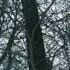 greenbriar canopy
