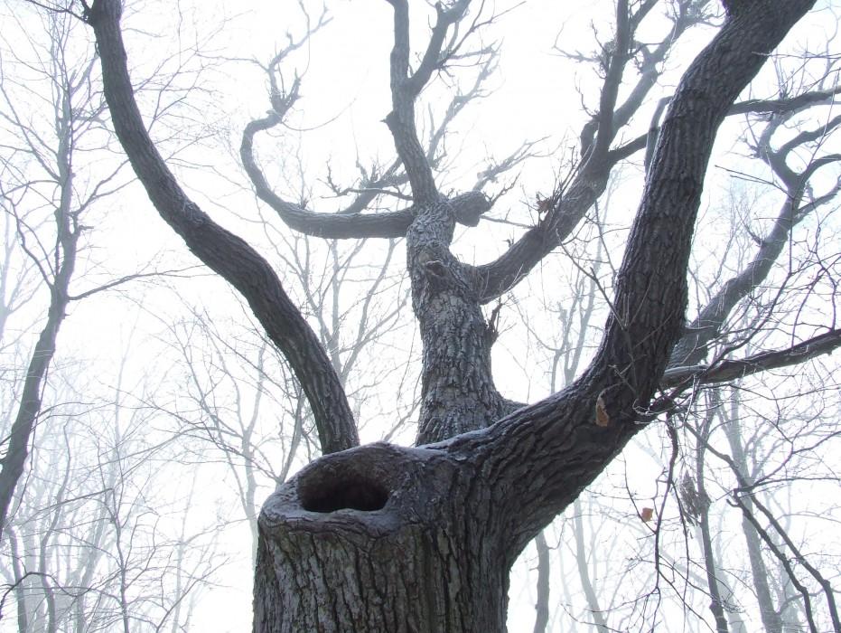 photoblog image the porcupine tree