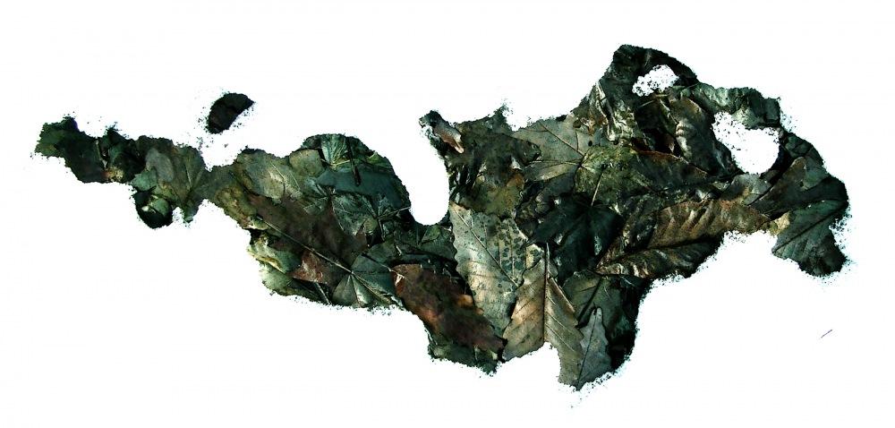 photoblog image leafmander