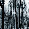 whitewashed woods