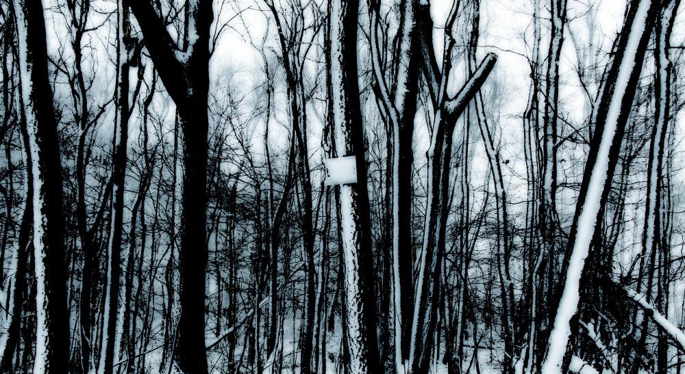 photoblog image whitewashed woods