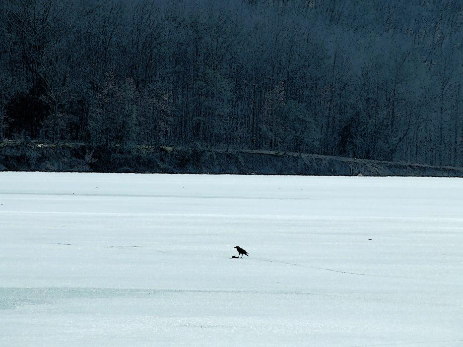 photoblog image crow on ice
