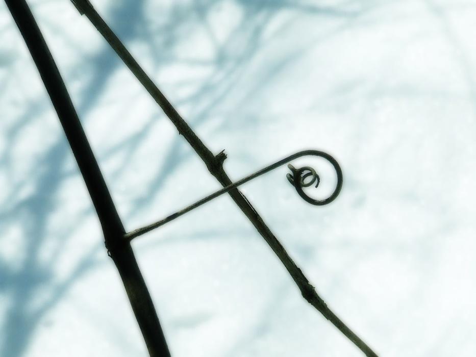 photoblog image tendril
