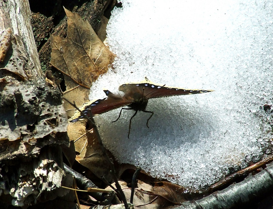 photoblog image snow butterfly
