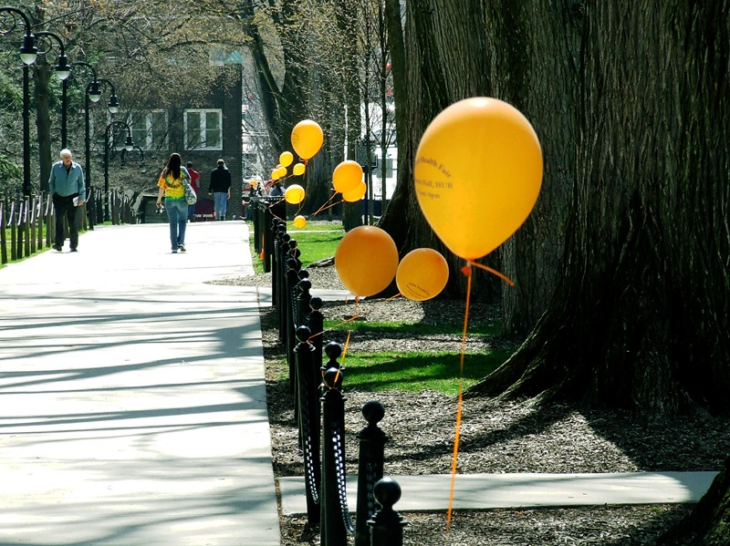 photoblog image elms and balloons