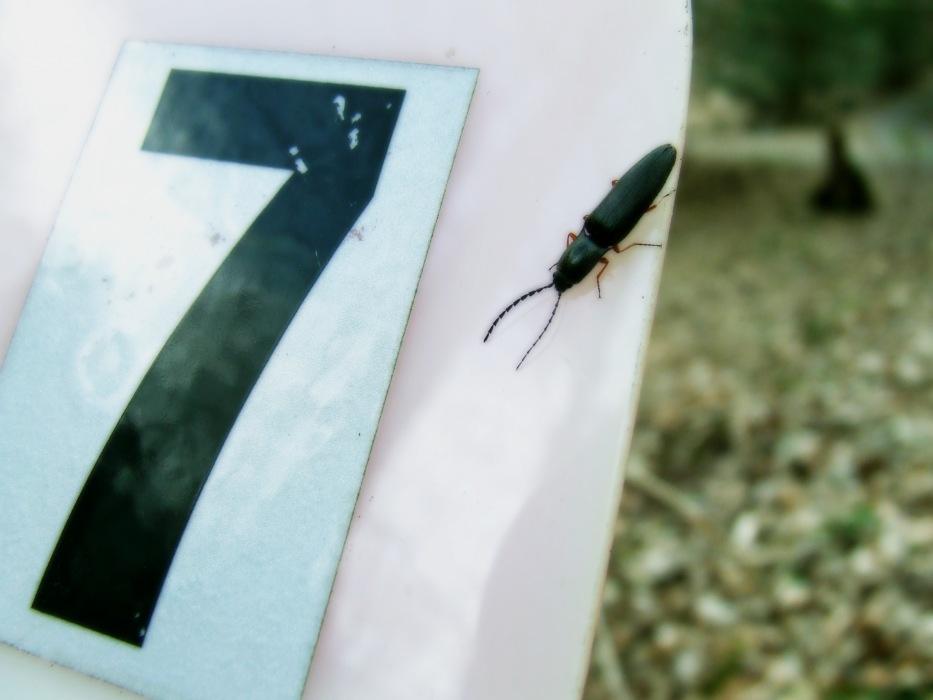 photoblog image beetle #7